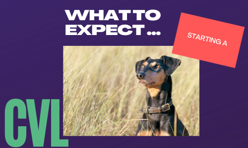 Be aware like this dog of what to expect